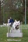 2012-04-28 Vinza flyball (3)