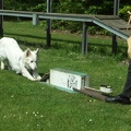 2012-05-19 vinza flyball