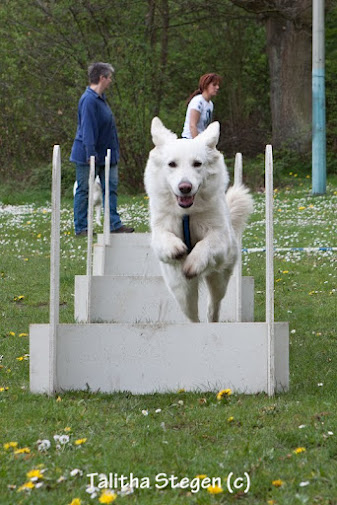 2012-04-28 Vinza flyball (1)