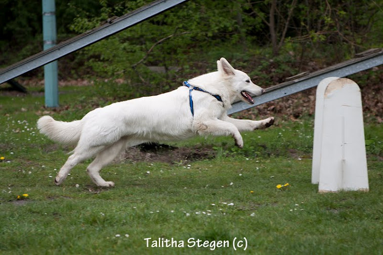 2012-04-28 Vinza flyball (5)